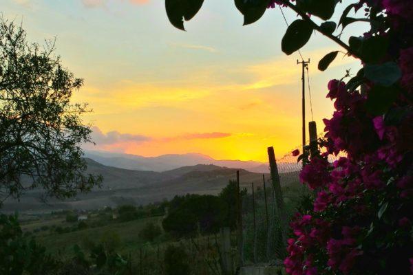 Outdoor Views - Pippa's Paddock Art-Agriturismo